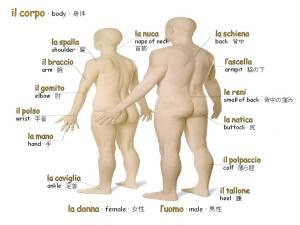 corpo umano 2a parte