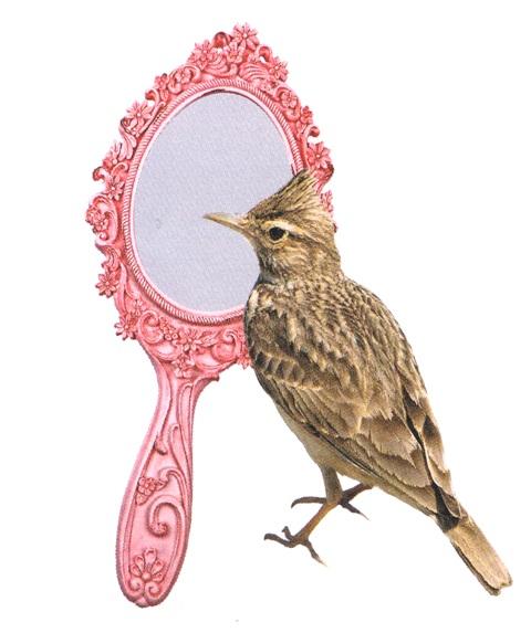 specchietto allodole